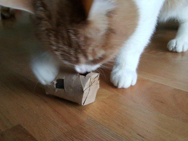 Meow loves the DIY cat treat dispenser