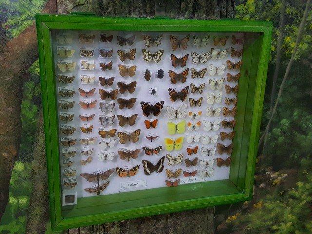 Explore the insectarium as a bonus