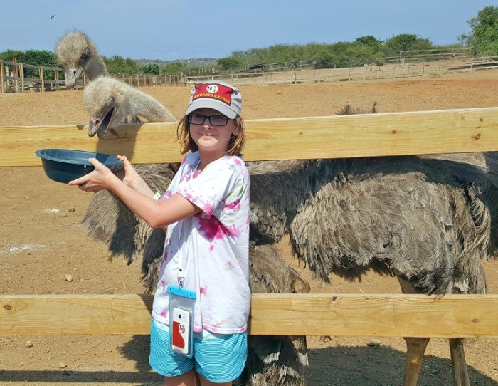 Best Curacao shore excursion ostrich farm feeding