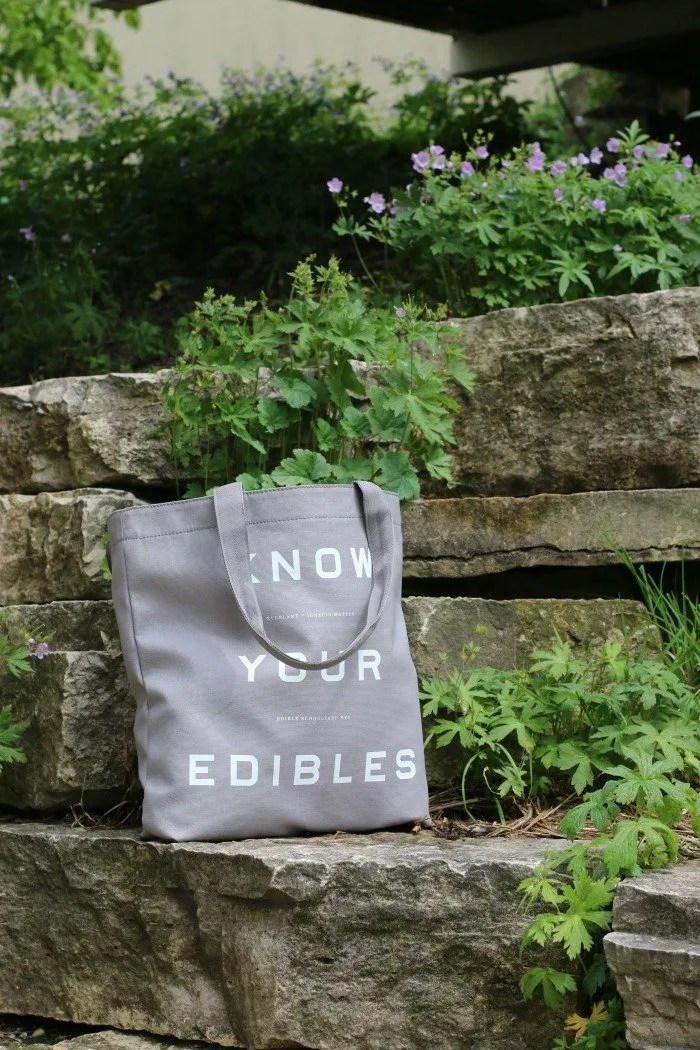 Everlane bag sitting on rocks