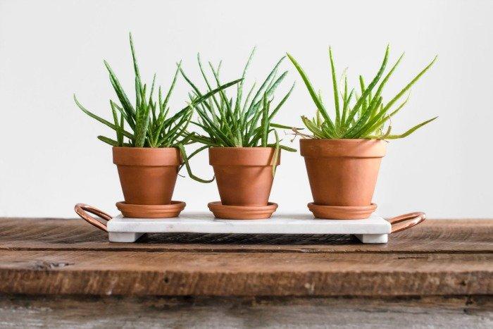 5 Great Health Benefits of Having Houseplants