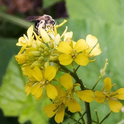 Why And How To Love A Bee Garden In Your Yard