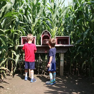 Summer Sun and Family Fun at Cherry Crest Adventure Farm