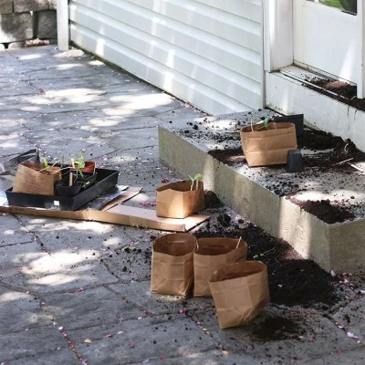 Garden Fail | Seedlings Sprinkled On The Patio