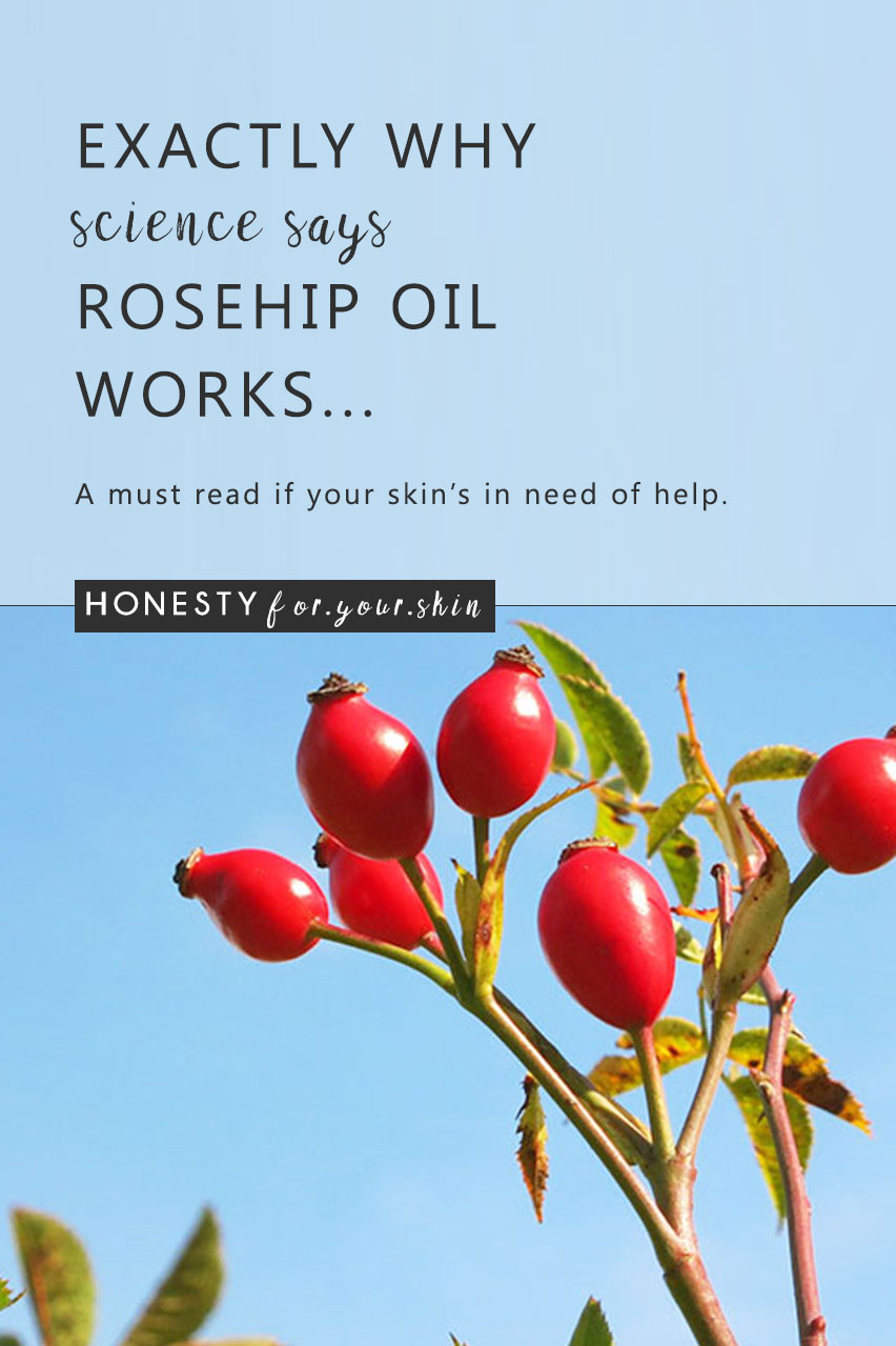 Rosehip oil has recently shot to the halls of skincare fame. Once unknown, rosehip oil really is unique with 2 huge, science backed reasons why this anti-ageing, anti-acne oil works... Oh and if you do use Rosehip oil, make sure to read the last part of this article before you invest! http://wp.me/p6LuQS-1ae