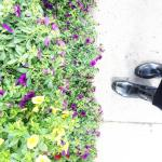 April showers bring May flowers springtime fromwhereistand flowers hunterboots