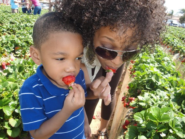 Mom and son strawberry picking