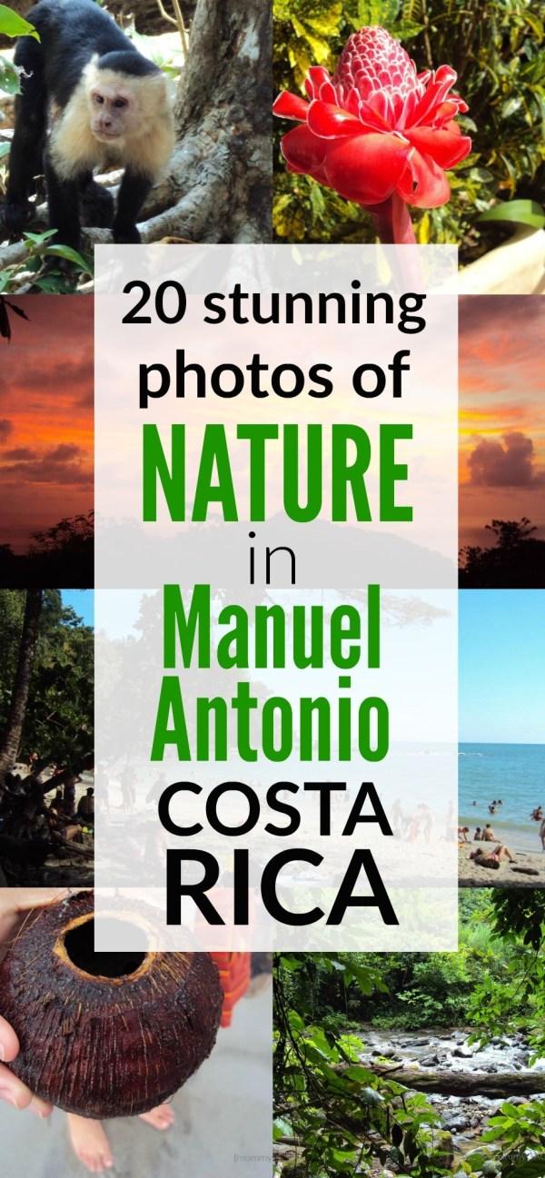 20 amazing nature photos in Manuel Antonio, Costa Rica - Nature and adventure travel lovers will have an amazing time in Manuel Antonio, Costa Rica!