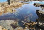 Tide pools in San Diego