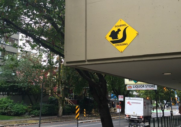 Cool things I saw in Vancouver BC, Canada, Squirrel crossing sign Comox Street