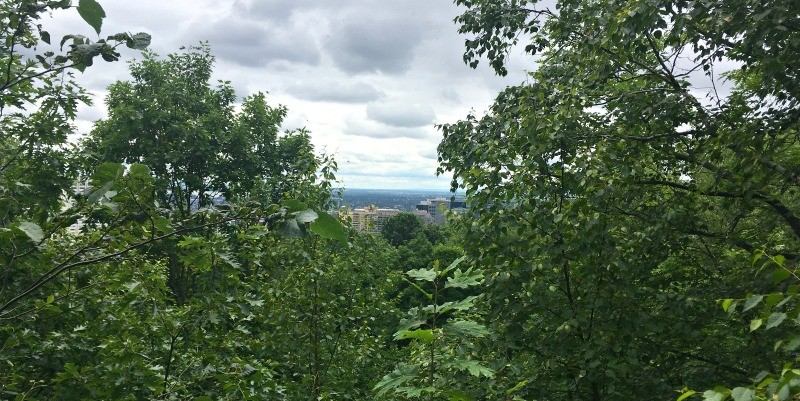 Hiking Parc du Mont-Royal, view from about halfway up the stairs