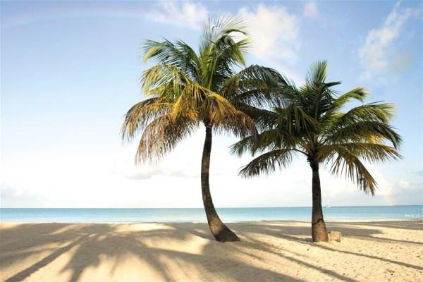 Antigua beach photos, palm trees at Jolly Beach
