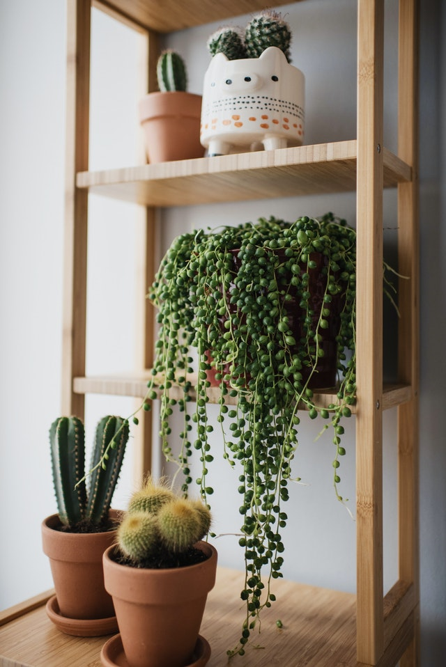 Cacti indoor plants succulents home decor