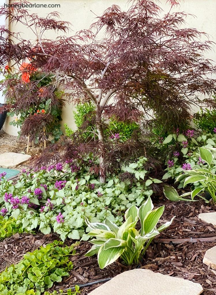 Young shade garden
