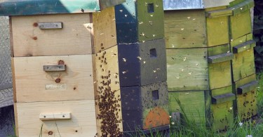 A-beehive-is-made-of-several-boxes