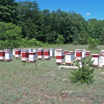 Withers Montagna Honey Farm, vicino Mancelona, ​​Michigan.