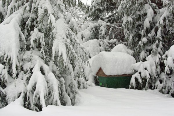 A top-bar hive covered in snow and shaded by trees.