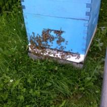 Hive da Gord Gibbings, Isola di Vancouver, BC.