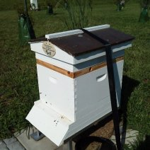 Herb Lester Apiaries, Tennessee. New bees.