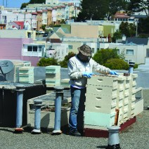 Charlie Blevins 'San Francisco alveari sui tetti.