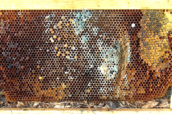 Physics for beekeepers: mold in a beehive - Honey Bee Suite