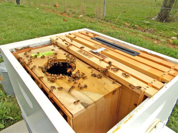 To install a package in cold weather, you can remove a few frames and put the entire box in the hive.