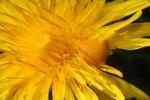 Bee poop on flowers: the best in sanitary practices?
