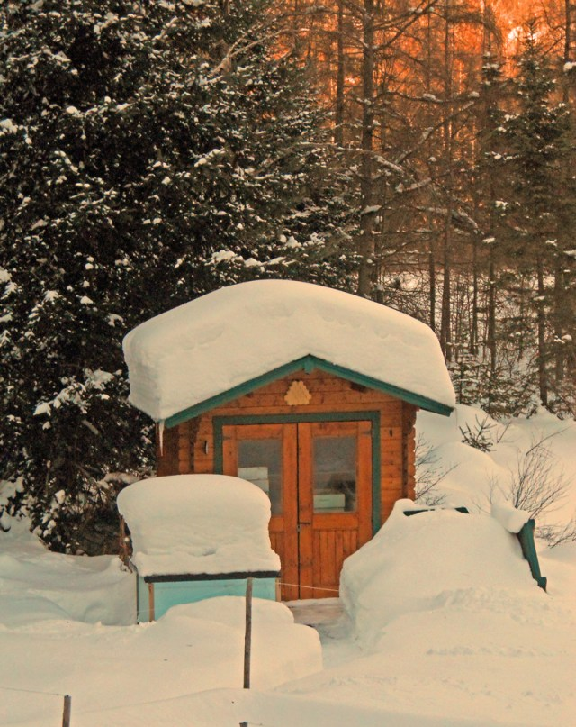 Hives-in-snow-Greg-Padley