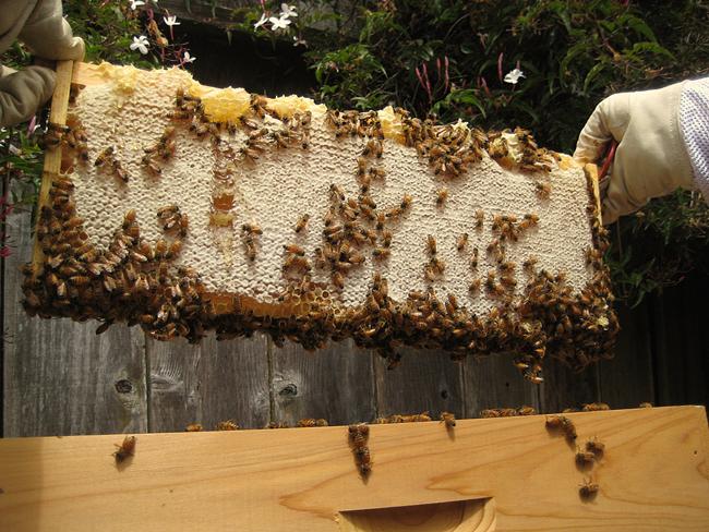 A-full-frame-of-honey