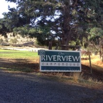 The feral colony took up residence next to the Riverview Campground in Maupin, Oregon. © Naomi Price.