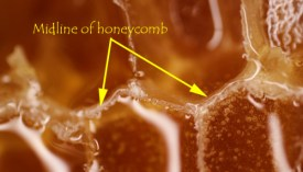 Comb honey foundation: yes or no? - Honey Bee Suite
