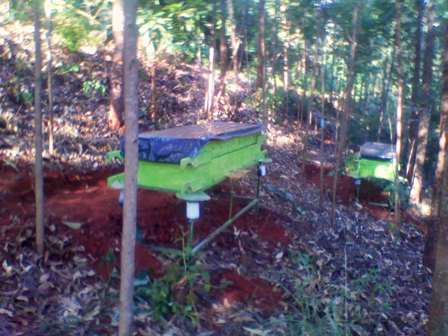 Hives in Kenya. Nicholas Mbugua