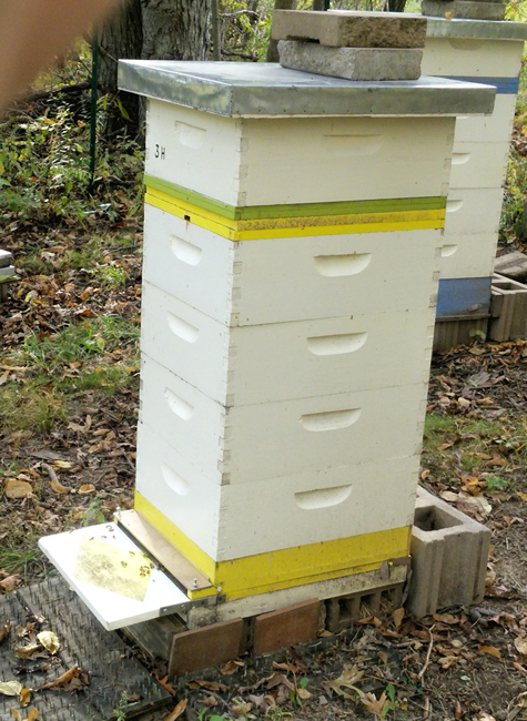 Hive-3-H-Carol-Nelson-650
