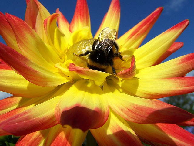 Bee on flower Pixabay