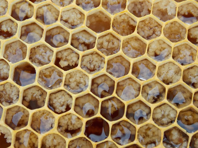 Honeycomb with crystallized honey