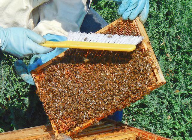 How much do honeycomb cells tilt
