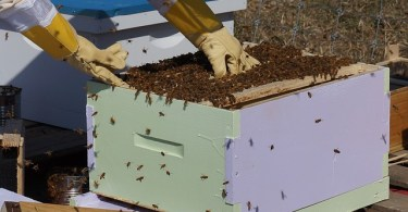The hard part of beekeeping.