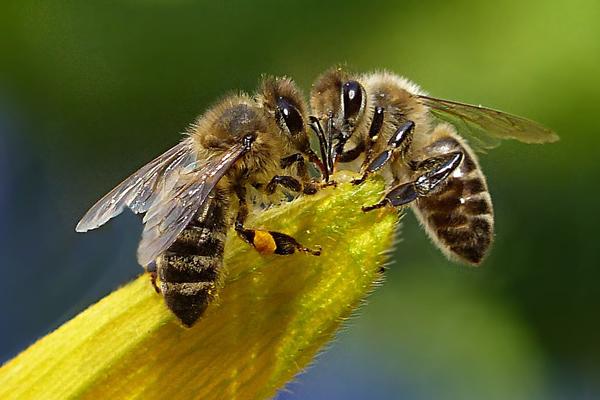 12 pcs//pack Beekeepers Bee hive Nuc box Entrance gates Beekeeping Equipment Fad