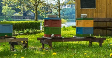 Beekeepers have a responsibility to each other to not let the mites be mites.