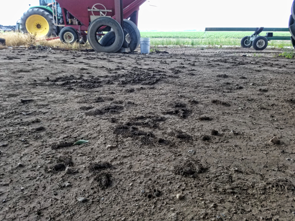 Bare soil is attractive to digger bees.
