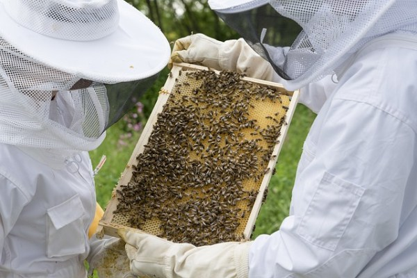The men and women of beekeeping: how are they different? Two beekeepers examine a frame of bees.