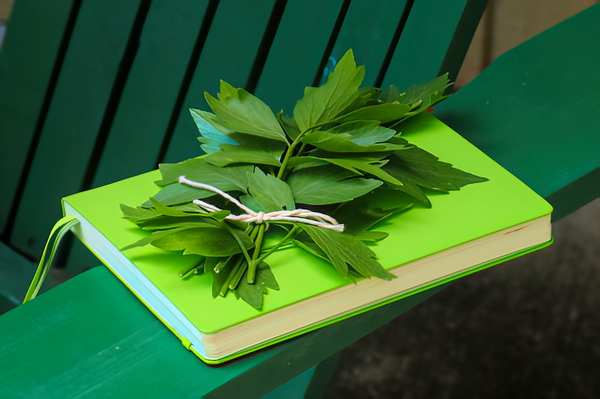 I dry the lovage leaves for cooking. Dried leaves on a notebook.
