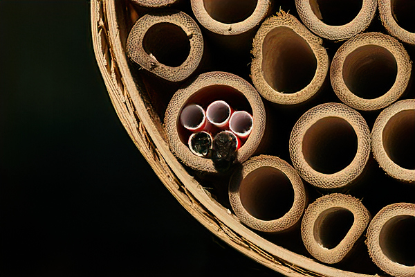 I put tiny straws in the big tubes to make them smaller but I thought they were too small for mason bees. Not so.