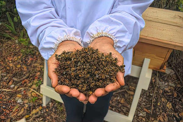 Thousands of dead bees littered the ground after aerial spraying for mosquitoes in the Florida keys.