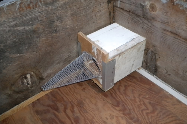 The vestibule is installed inside the brood box before the brood box is attached to the bees' main entrance. The funnel can be made from wire mesh or plastic, but plastic is less likely to snag antennae and legs.