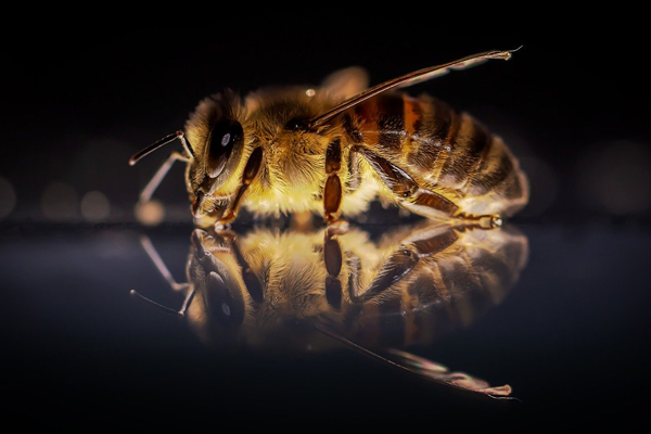 A healthy honey bee: The value of data vs date in mite management.