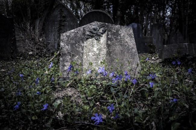 Blue flowers growing around a gray cemetery stone.