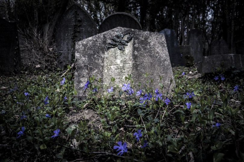 Blue flowers growing around a gray cemetery stone.