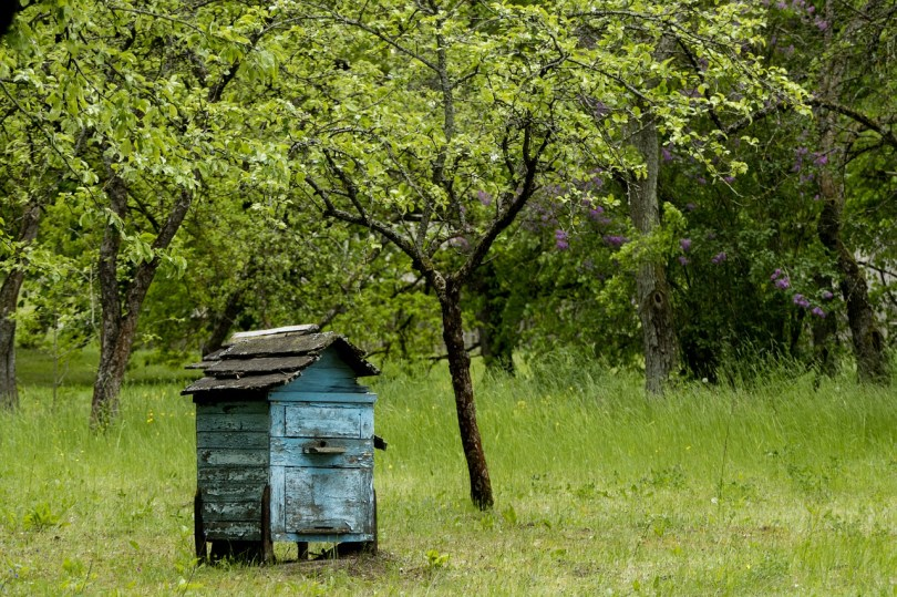 Old blue beehive in an orchard. Only you can decide when it's time to quit.