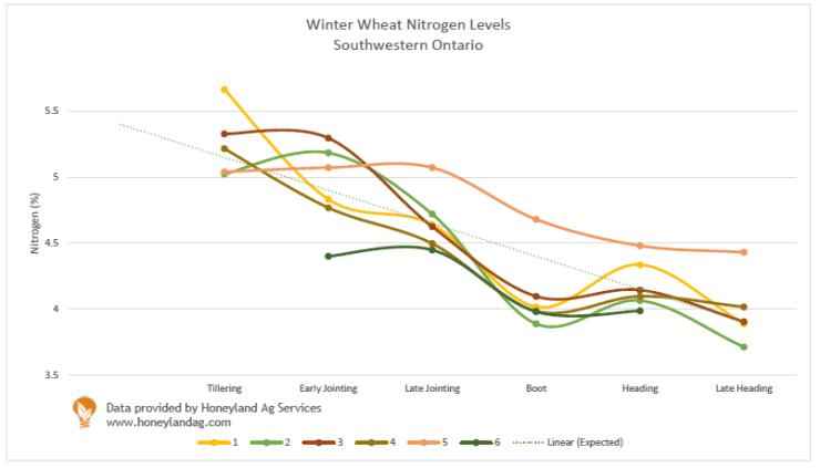 Nitrogen Status Wheat